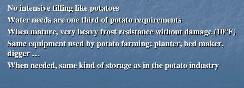 No intensive tilling like potatoes Water needs are one third of potato requirements When mature,