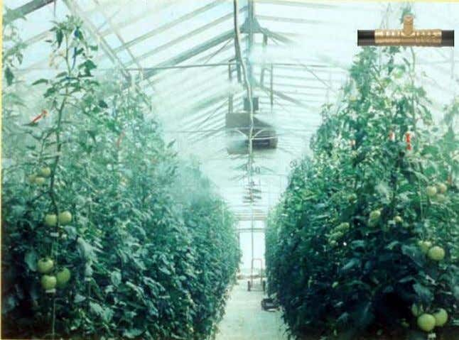 and proper control of water spaying and fan operation. Figure 7. Fogging system for greenhouse cooling.