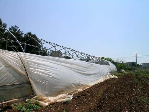 thus reducing the sustainability of the greenhouse industry. Figure 16. Rupture of a greenhouse covering film