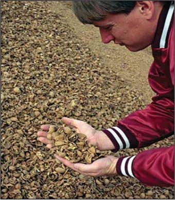 wood pellets have achieved considerable success in Europe. Figure 4: Walnut Shells for Biomass Combustion. Photo