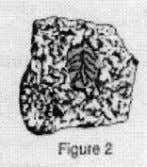 Characteristics of Sedimentary Rocks 1. Most sedimentary rocks are made of fragments of other rocks. These