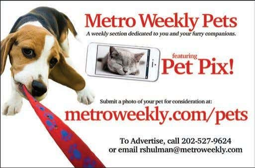 "Submitted by Metro Weekly readers Pet Pix Shifra Daryl Love's 2-year-old Pit Bull ""Shifra loves to"