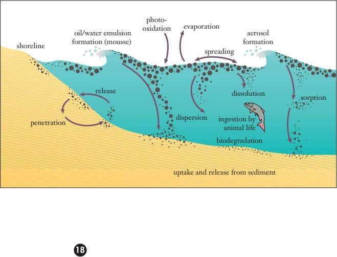 photo- evaporation oxidation oil/water emulsion aerosol formation (mousse) formation shoreline spreading release