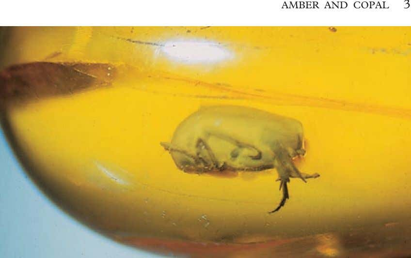 AMBER AND COPAL 3