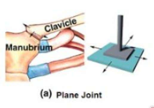 joints ● Movement that does not occur on axis ● Slide past each other ● Non-axial