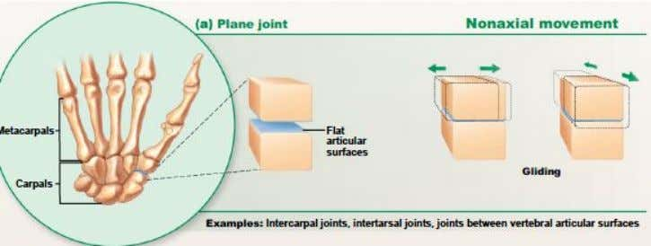 that is not around on an axis ● allows for no movement in any plane ●