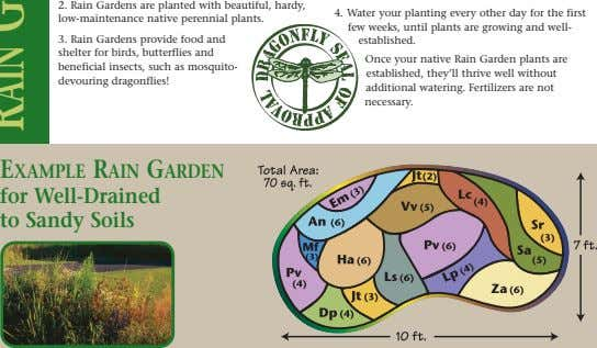 2. Rain Gardens are planted with beautiful, hardy, 4. low-maintenance native perennial plants. 3. Rain
