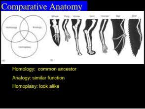Comparative Anatomy Homology: common ancestor Analogy: similar function Homoplasy: look alike