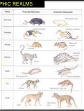 BIOGEOGRAPHIC REALMS Placentals Marsupials (pouched)