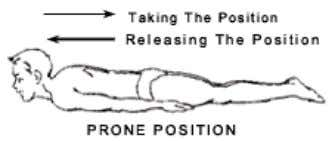 slowly bring hands to the normal position and take supine position. Asana In Prone Position SARAL