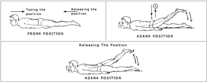 strains should be avoided. SHALABHASANA (Ardha Shalabhasana) Posture Pre position Procedure Position Releasing