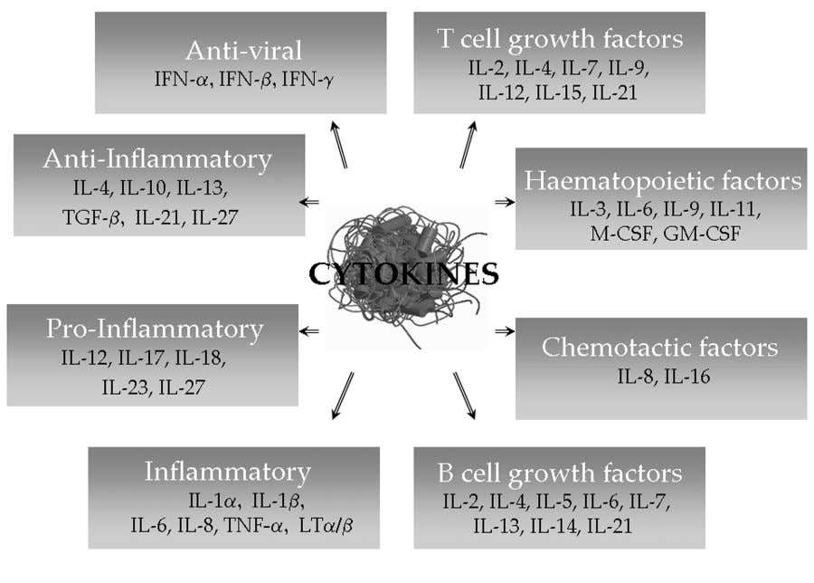 CUTLER & BROMBACHER: CYTOKINE THERAPY 17 FIGURE 1. Functional roles of cytokines. have been developed with