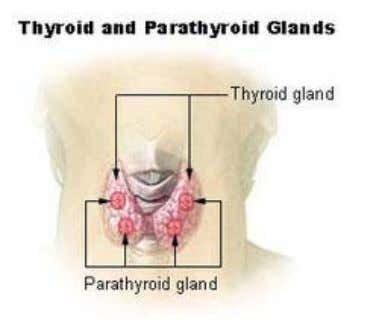 thyroid Thyroid and parathyroid. //education.yahoo.com/reference/gray/subjects/subject?id=272#p1269) n extension of