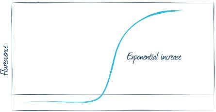 Exponential increase Flurescence