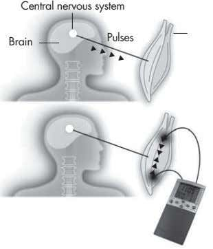 Central nervous system Pulses Brain
