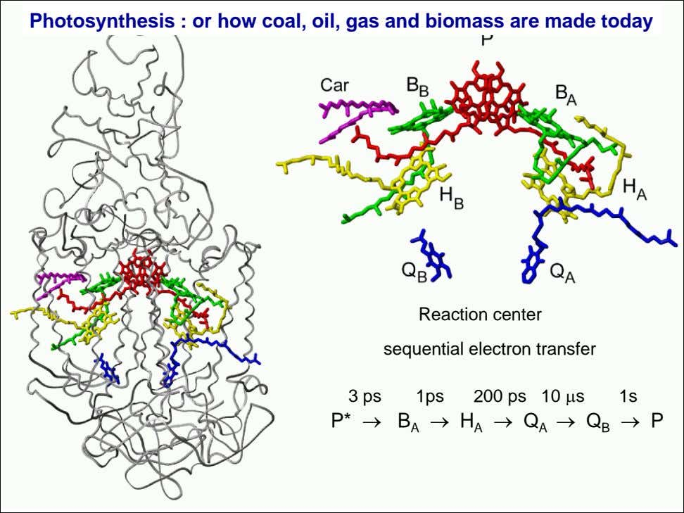 Photosynthesis : or how coal, oil, gas and biomass are made today Reaction center sequential