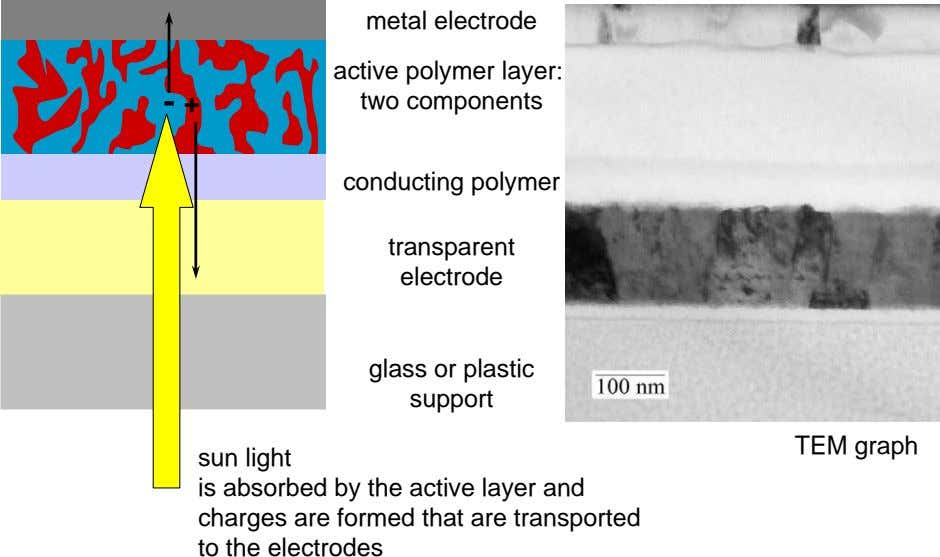 metal electrode active polymer layer: two components conducting polymer transparent electrode + glass or plastic