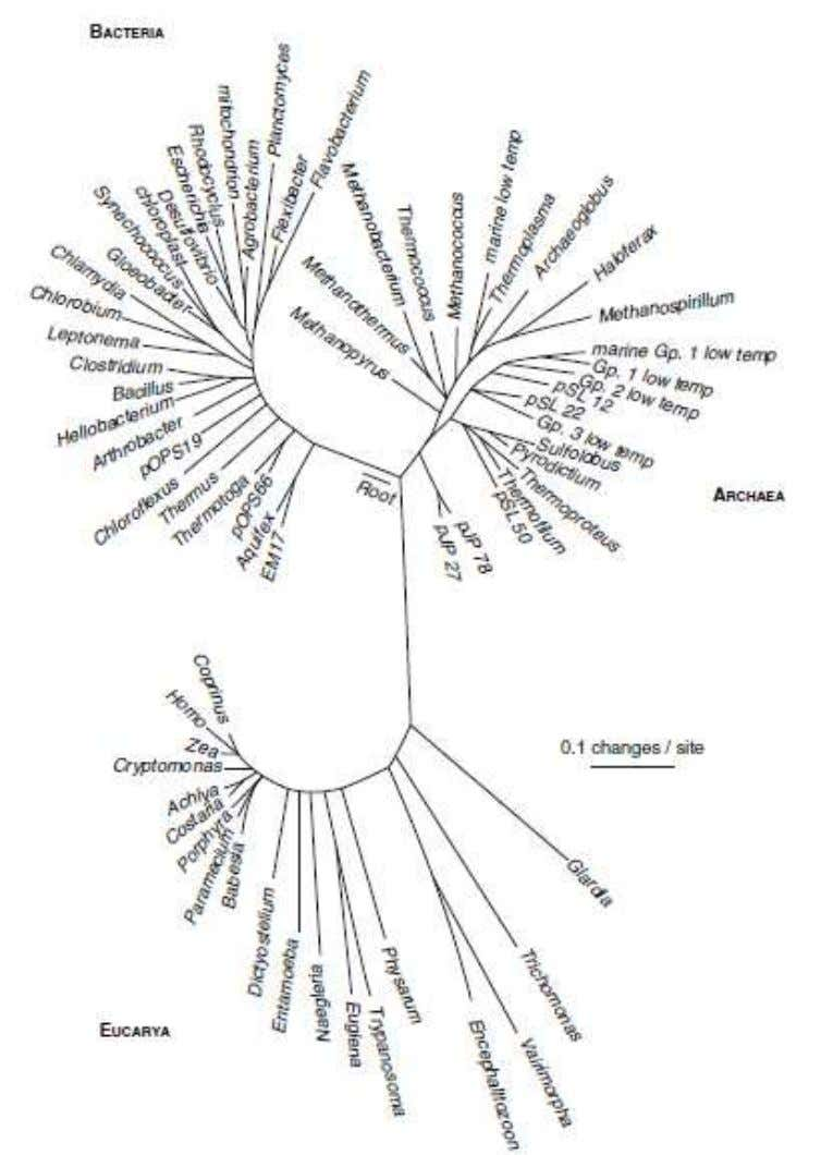 Universal phylogenetic tree Karl Woese, How We Do, Don't, and Should Look at Bacteria and