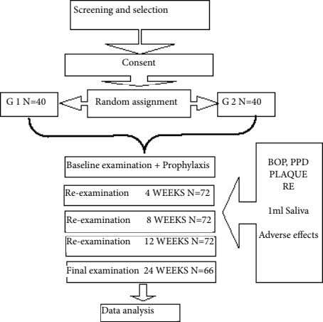 Screening and selection Consent G 1 N=40 Random assignment G 2 N=40 BOP, PPD Baseline