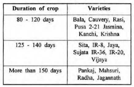 195 Rice Varieties 196 Parched Rice Arisi Pori 197 Parched Paddy Nelpori 198 Cashcrop Sugarcane 199