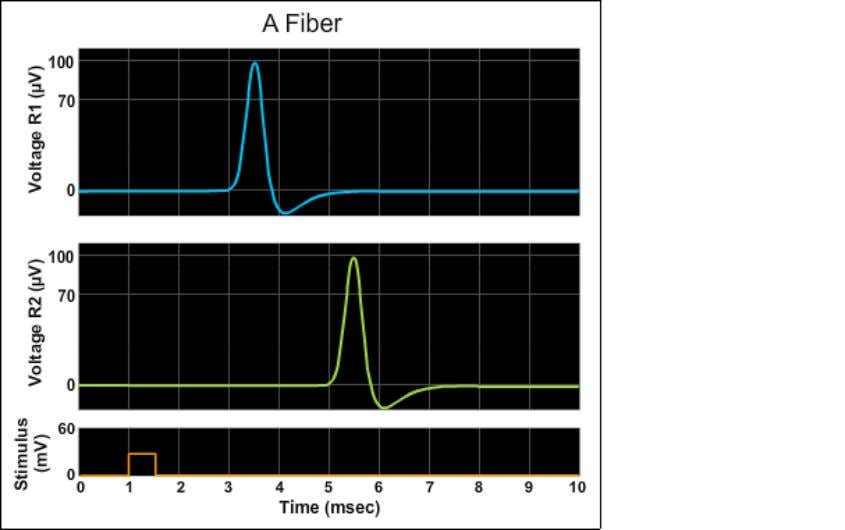 B fiber Light 30 0.1 10 0.01 10 C fiber None 30 0.1 100 0.1 1