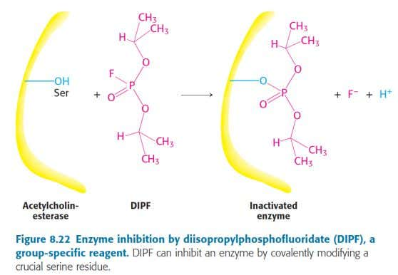 INHIBIDORES IRREVERSIBLES Group-specific reagents
