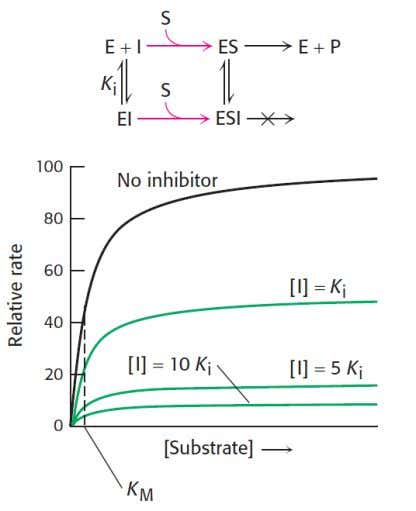 NONCOMPETITIVE INHIBITOR The reaction pathway shows that the inhibitor binds both to free enzyme and to