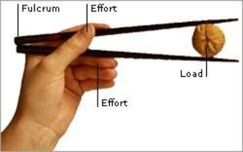 Here are two other examples of levers: Effort Load Fulcrum Which of the following statements is