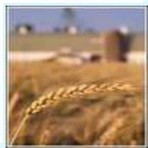 AGRI-BUSINESS ITS SCOPE AND OPPORTUNITIES COMPILED BY Abhishek Nandan Email- abhirau@gmail.com 1
