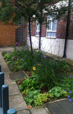 led by Groundwork London's Green Team and Sanctuary Housing, and planted up by local residents |