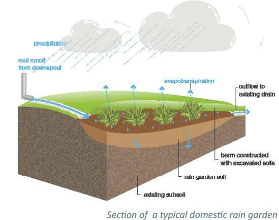 Section of a typical domestic rain garden