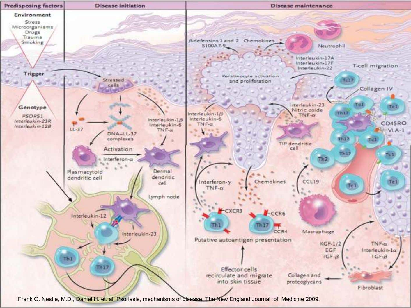 Frank O. Nestle, M.D., Daniel H. et. al. Psoriasis, mechanisms of disease. The New England
