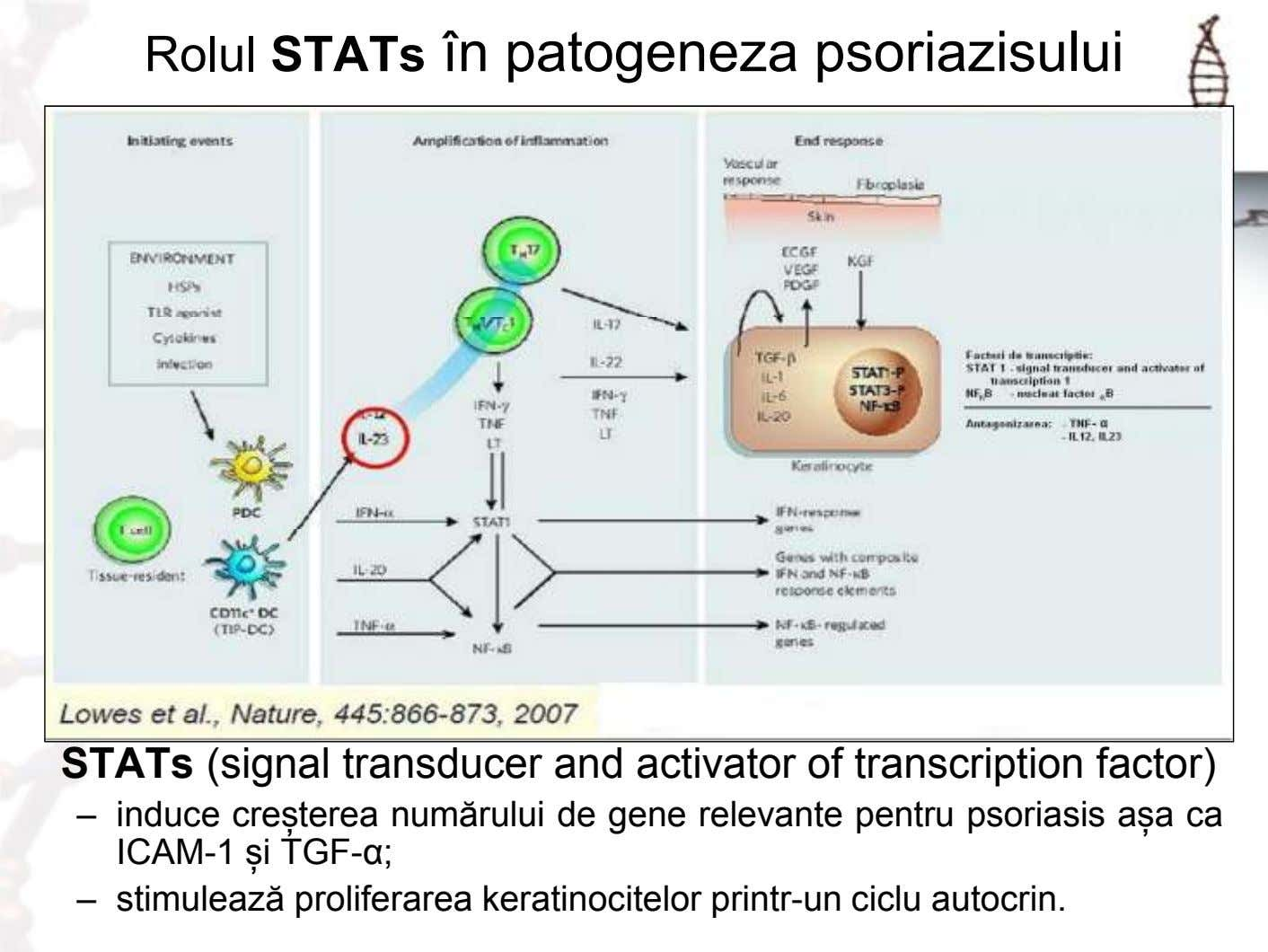 Rolul STATs în patogeneza psoriazisului STATs (signal transducer and activator of transcription factor) – induce