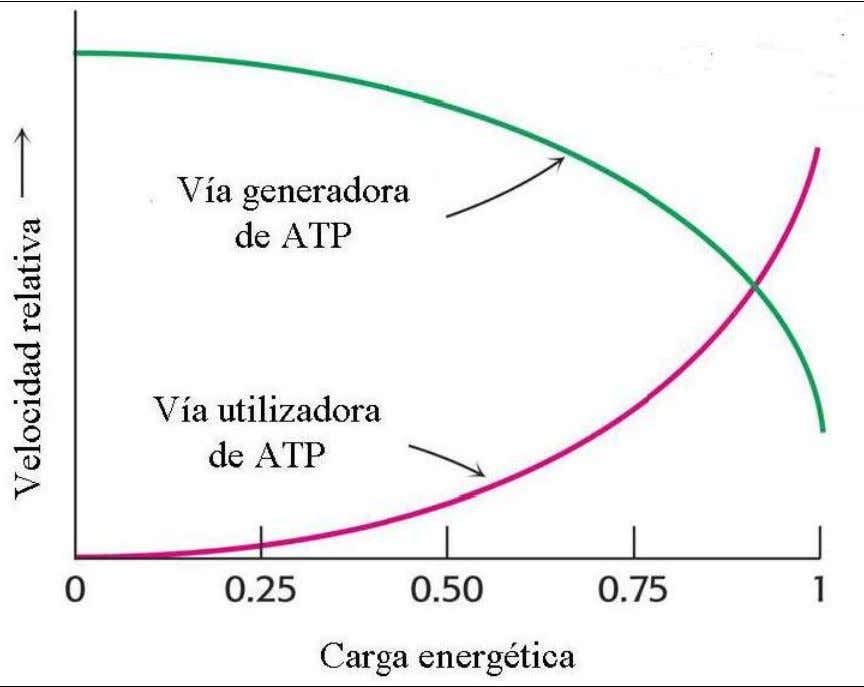 homeostasis del estado energético celular.(Fig.No.6) Figura No.6. Diagrama del estado energético global de la