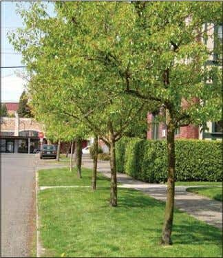 street trees. Residential street without street trees Residential street with street trees DC1. DC3. Natural