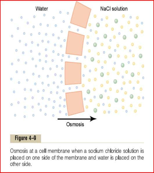of water across a selectively permeable membrane, caused by a concentration difference of water is called