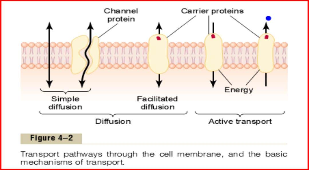 Lipid barrier of cell membrane & Cell membrane transport proteins: