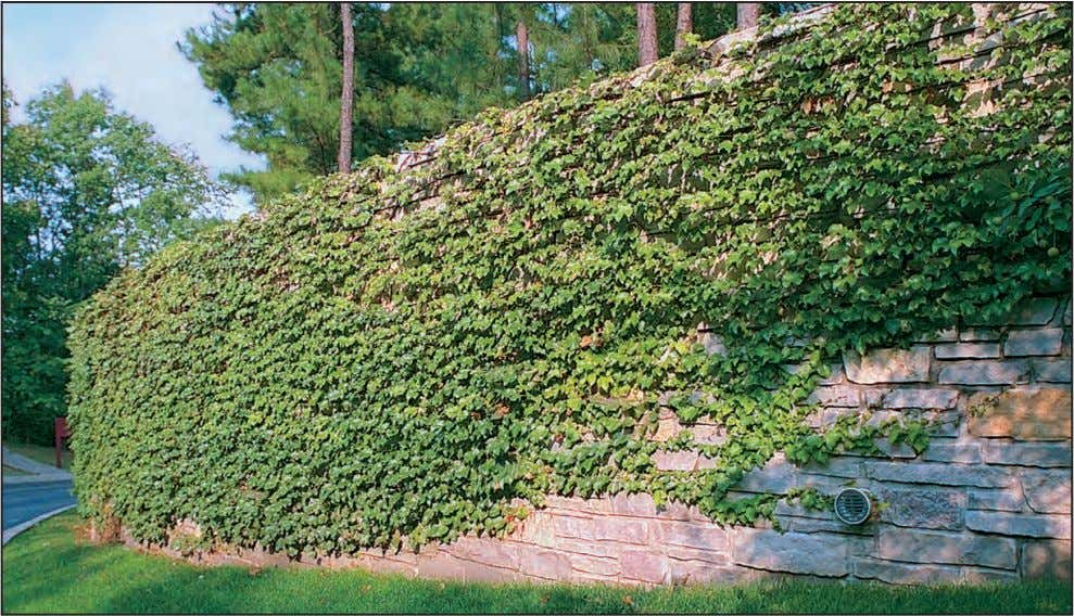 and appropriately placed vegetation to screen parking areas. Retaining walls can help preserve existing vegetation. The