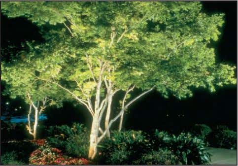 interesting effect, provide security, and direct attention. Uplighting a prominent tree can create a dramatic nighttime