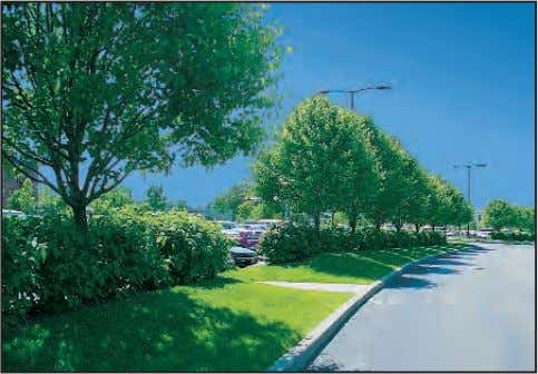 effectively screen parking areas from view along roadways. Design parking areas to include enough vegetation to