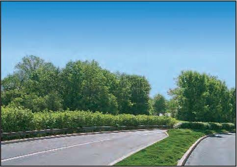 earth berms effectively screen the adjacent parking lots. The roadway median is an attractive planter for