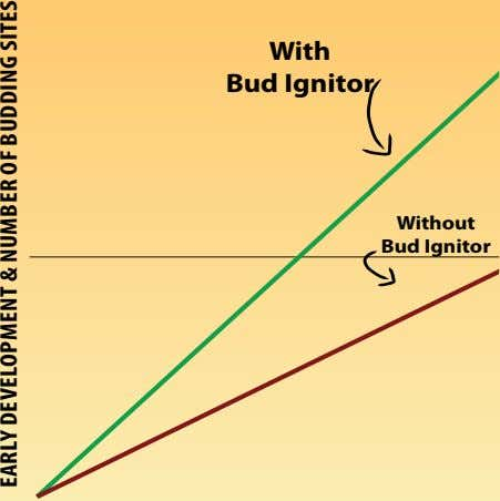 With Bud Ignitor Without Bud Ignitor Early dEvElopmEnT & numbEr of budding siTEs