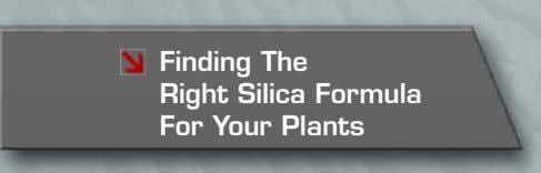Finding The Right Silica Formula For Your Plants