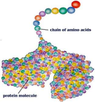 One important function of DNA is that it directs protein synthesis . It occurs outside the