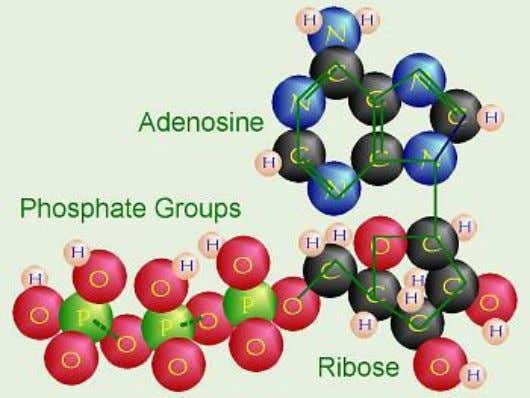 is a porphyrin ring , which consists of several fused rings of carbon and nitrogen with