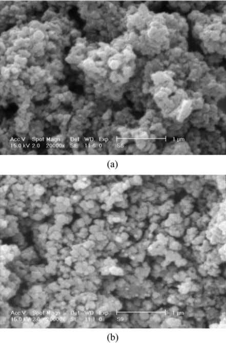 in conductive polymers, electrical conductivity increases, Fig. 7. Scanning electron micrograph of Ani/ANr