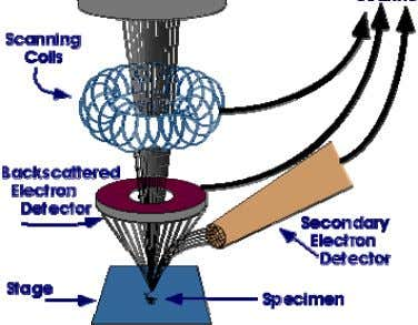 conditions a resolution of even 1 nm can be attained. Figure 5. Schematic representation of SEM
