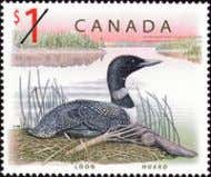 is a Canada's two-dollar coin. on a. loon b. Canada goose 3 The Blue Jays baseball