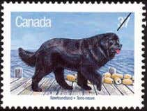 boats. They are excellent swimmers. a. Newfoundland b. Husky 35 Anne of Green Gables is one