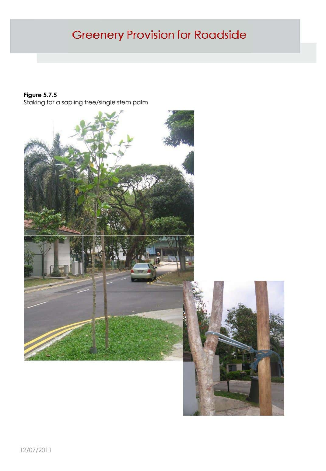 Figure 5.7.5 Staking for a sapling tree/single stem palm 12/07/2011